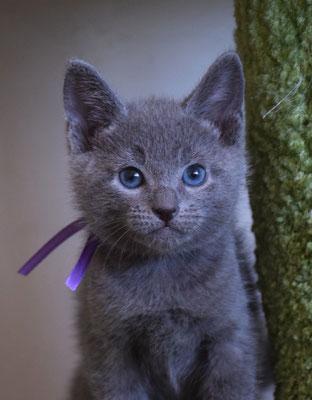 Котик Фиолетовый