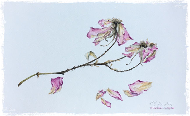 Roses fanées, aquarelle / watercolor