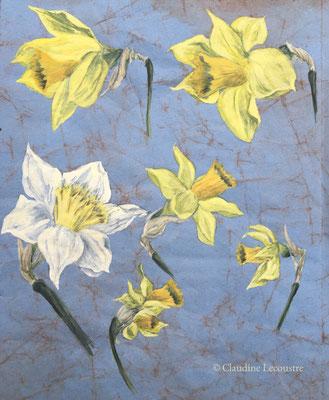 Croquis de narcisses / Daffodils sketch, aquarelle et gouache / watercolor and gouache