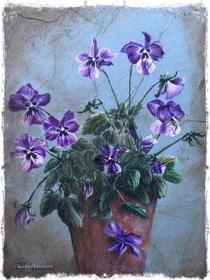 Viola Cornuta, gouache, aquarelle, sepia et pastel sec / gouache, watercolor, sepia and dry pastel