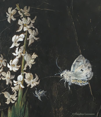 Jacinthe blanche et papillons de nuit / White hyacinth and moths (detail), gouache