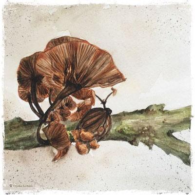 Champignon, aquarelle / watercolor