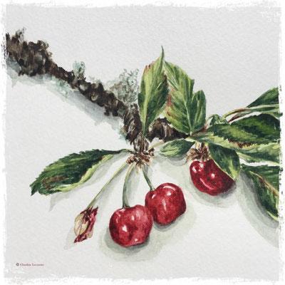 Cerises (détail), aquarelle / watercolor