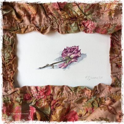 Rose fanée, aquarelle / watercolor