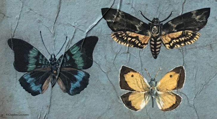 La collection (détail), gouache, aquarelle, pastel sec / gouache, watercolor, dry pastel