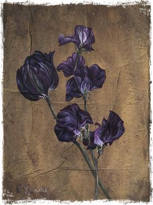Tulipe et pois de senteur pourpres, acrylique / acrylic