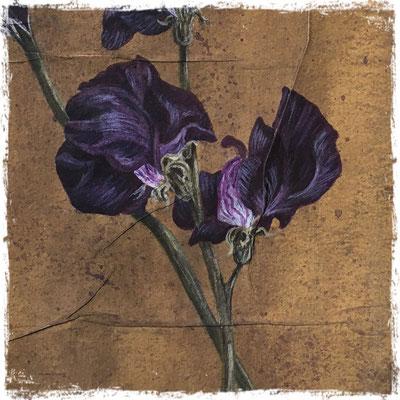 Tulipe et pois de senteur pourpres (détail), acrylique / acrylic