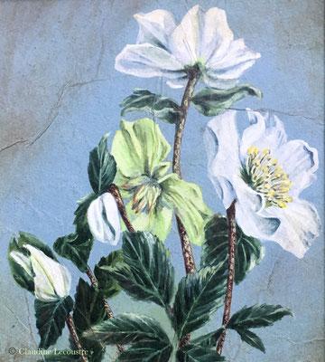 Helleborus niger, gouache, aquarelle, pastel sec / gouache, watercolor, dry pastel
