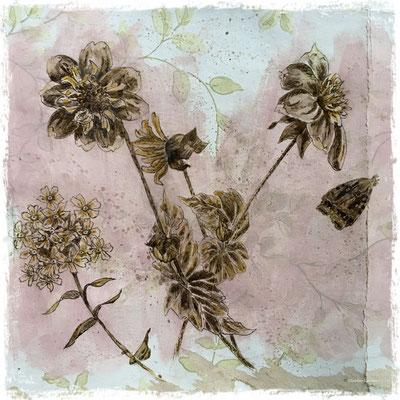 Dahlias collerette, phlox et papillon de nuit,  encre sepia et acrylique sur lambeau de papier peint / sepia ink and acrylic on vintage wallpaper piece