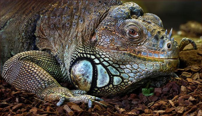 """""""Grüner Leguan"""" Foto: Jaroslaw Miernik"""