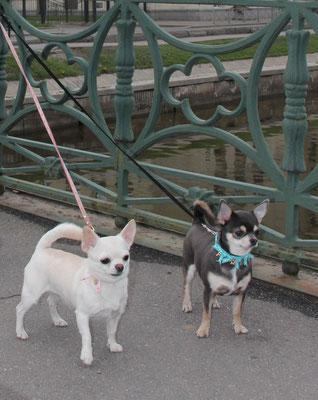 Шайни и Рика