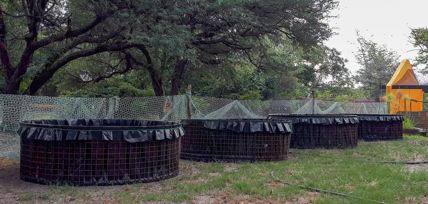Hippo AquaCulture Farm - Fish tanks