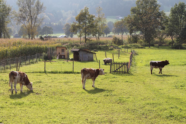 Hühner, Schafe und Kühe