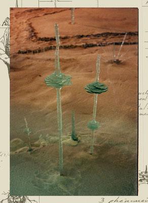 Pétale sur pied (autre vue) dans un Jardin des Silicates