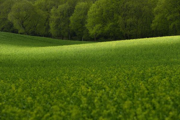 Lichtfeld, Landschaftsfoto von Jürgen Müller