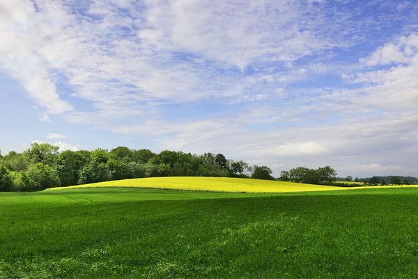 Landschaft mit Rapsfeld, Landschaftsfoto von Jürgen Müller