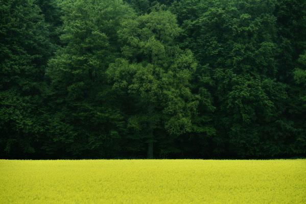 Waldrand mit Raps, Landschaftsfoto von Jürgen Müller