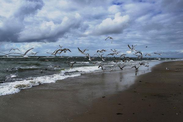 Sylt; Möwen am Strand, Landschaftsfoto von Jürgen Müller