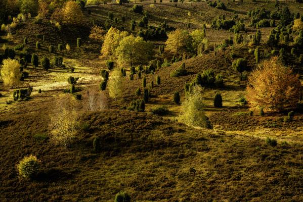 Goldener Totengrund, Totengrund, Lüneburger Heide, Landschaftsfoto von Jürgen Müller