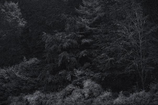 Silberwald, Landschaftsfoto von Jürgen Müller