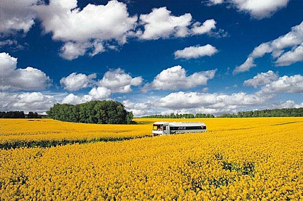 Tanklastwagen fährt durch Rapsfeld, Jürgen Müller