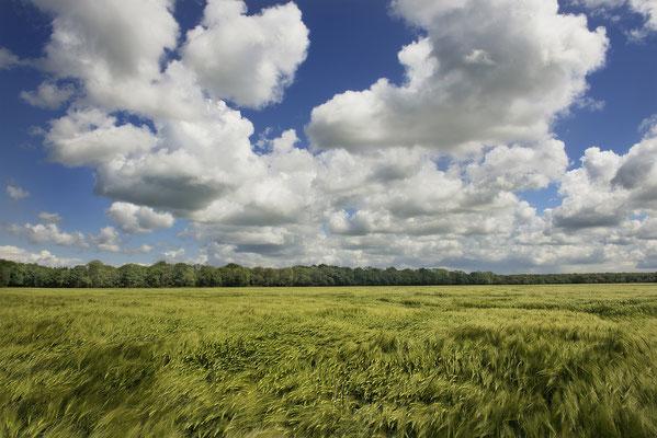 Gerstenfeld, Landschaftsfoto von Jürgen Müller