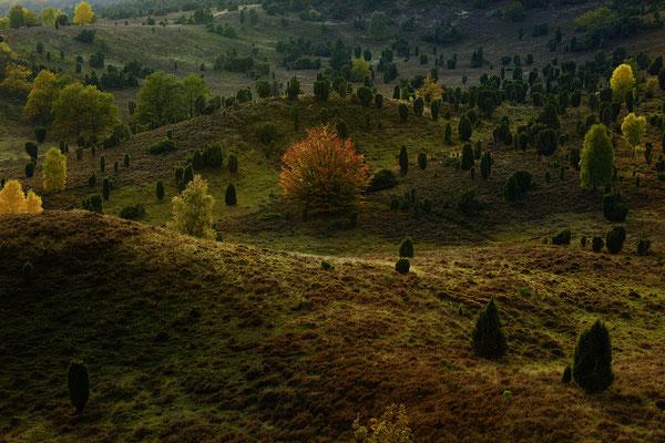 Heidekrater, Totengrund, Lüneburger Heide, Landschaftsfoto von Jürgen Müller