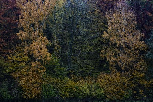 Waldrand im Herbst, Landschaftsfoto von Jürgen Müller