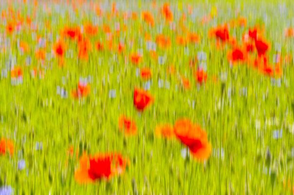 Mohnblüten im Wind, Landschaftsfoto von Jürgen Müller