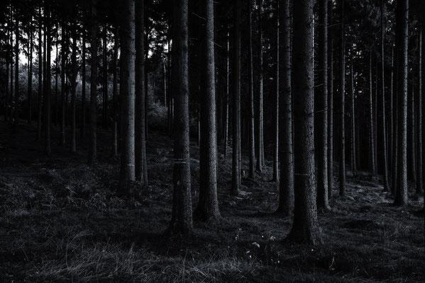 Tiefer Forst, Landschaftsfoto von Jürgen Müller