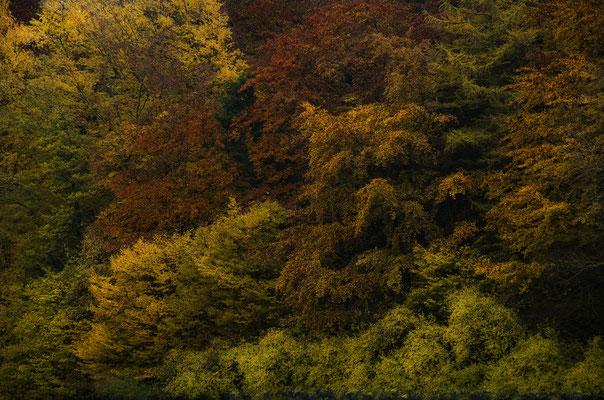 Herbsttöne, Landschaftsfoto von Jürgen Müller