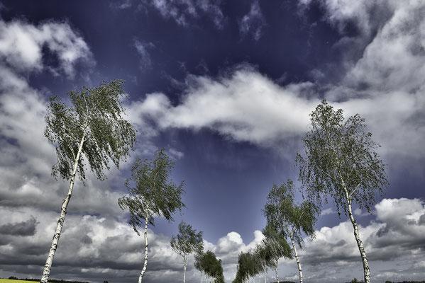 Birkenallee zum Himmel, Landschaftsfoto von Jürgen Müller
