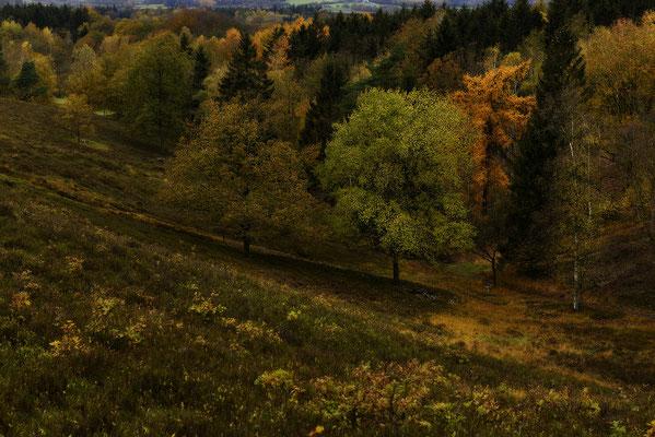 Herbst im Aukrug, Landschaftsfoto von Jürgen Müller