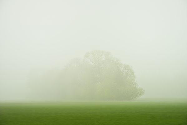 Baum im Nebel, Landschaftsfoto von Jürgen Müller