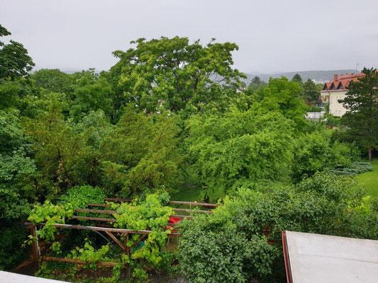 Blick aus dem Fenster des Massageraums bei Regenwetter.