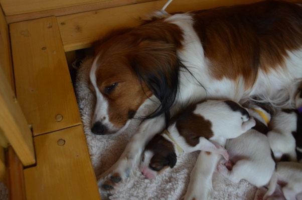 Puppy Nr.5