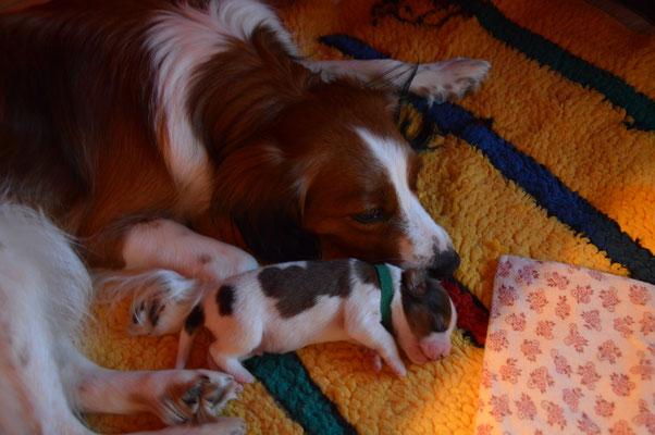 Puppy Nr.6
