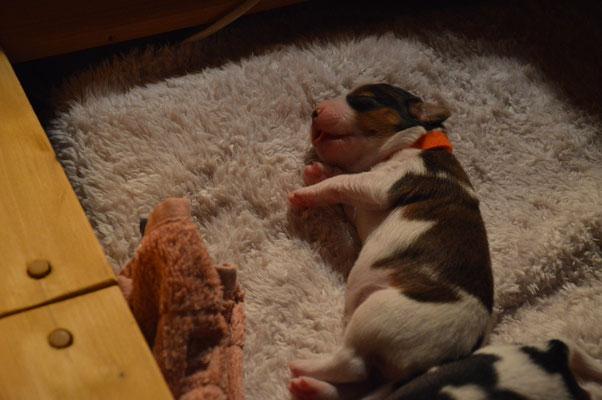 Puppy Nr.7