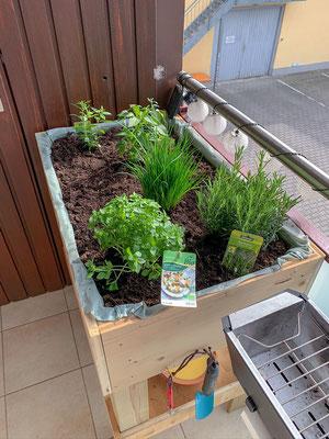 Bepflanztes Hochbeet auf unserem Balkon