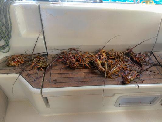 Einheimische verkaufen frische Langusten