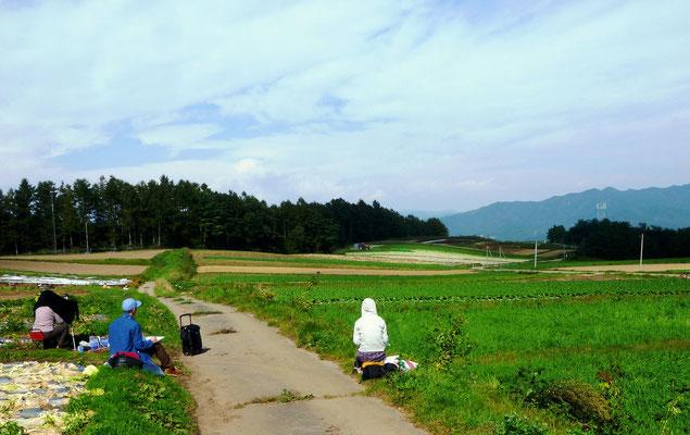 小海町の高原畑をスケッチ(白菜、レタス、セロリ、サニーレタスなどが栽培されている)