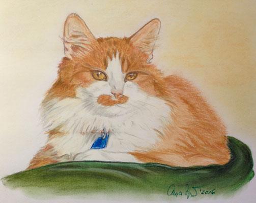 """""""Grettir"""", Katze aus Island, Pastellkreide auf Papier 2016"""