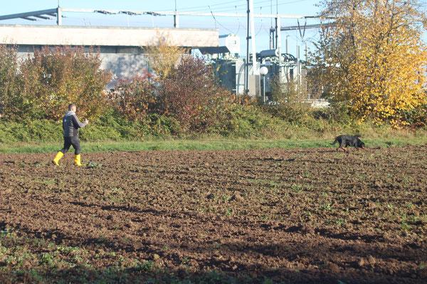 Tobi mit Becks vom Bieselsberg (Fährte IGP2)