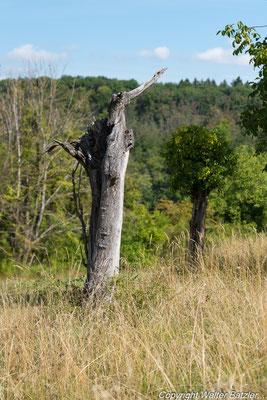 Nichts ist lebendiger als ein toter Baum