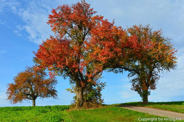 Herbstliche Baumgruppe