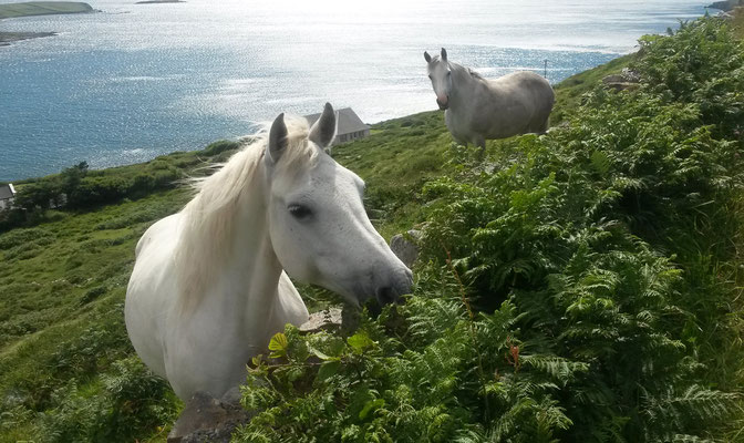 Hillside Lodge - Clifden, Connemara, Galway County, Ireland - horses