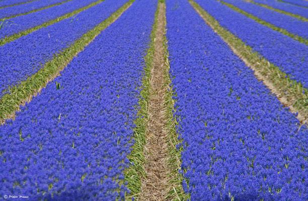 Egmond aan Zee, Mai 2010