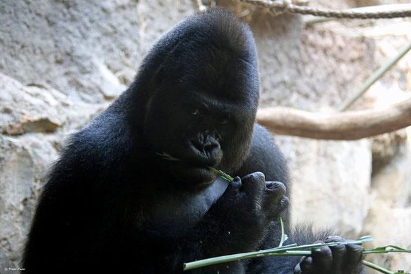 Frankfurter Zoo, 2.Juni 2014