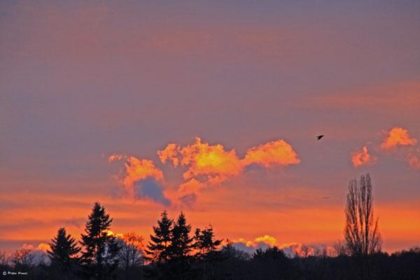 Oberursel, 15.12.2010 16:23