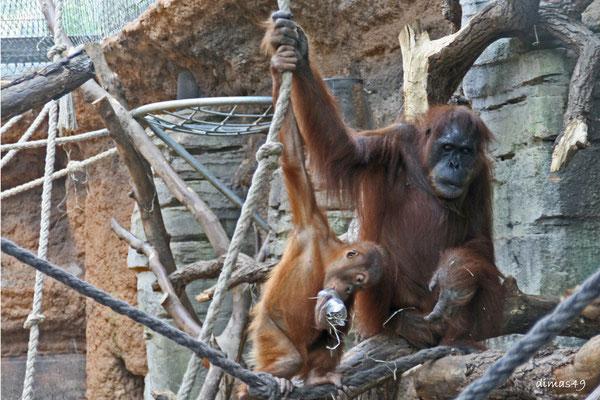 Zoo Frankfurt, 06.07.2009